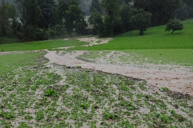 Überflutete Felder bei der Firma Rosenhuber in Dottikon.