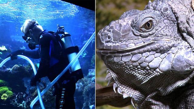 Aquarium-Putzer / Faszination Reptilien