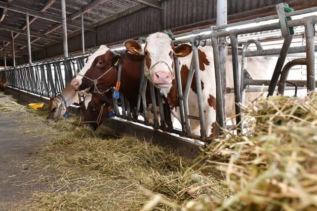 Tierfutter: Wie viel soll man importieren, wie viel Fleisch essen?