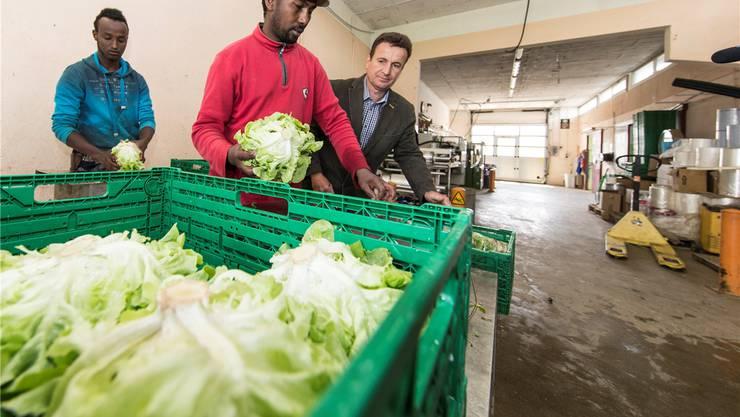 In der Schweiz finden sich kaum noch Bewerber für die Arbeit auf Bauernbetrieben. Nun sollen Flüchtlinge als Hilfskräfte eingesetzt werden.