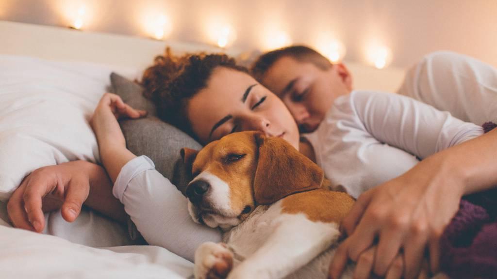 Hund schlägt Mensch – Partner würden sich für Vierbeiner entscheiden