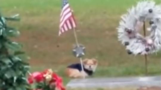 Der treue Hund «Deta» weigert sich, das Grab seiner verstorbenen Besitzerin zu verlassen.