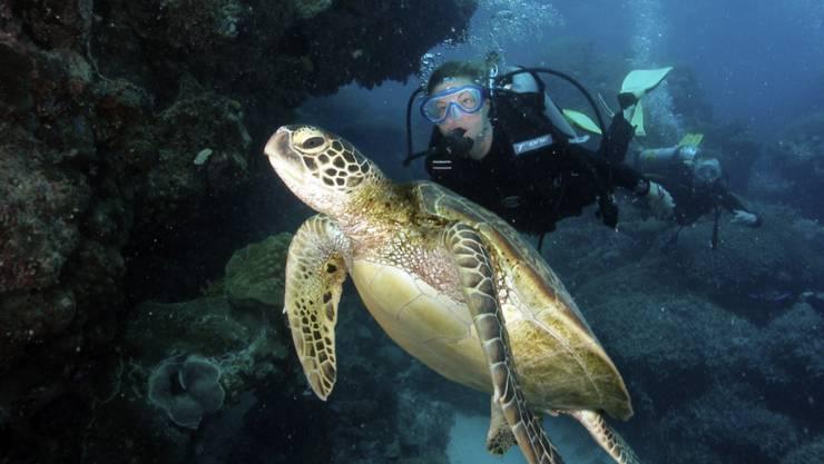 Wieviel Plastikabfall diese Suppenschildkröte in Australien wohl im Bauch haben mag? (Archivbild)