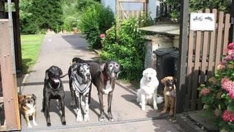 Ein Spielplatz für Hunde In Eiken ist das Bald Tatsache