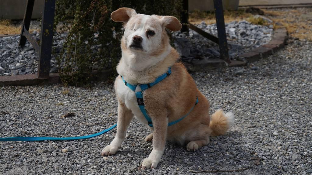 Patenhund Jessy