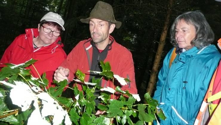 """Daniel Schmutz, Förster des Forstreviers Wasseramt, instruiert die """"Z-Baum-Methode""""."""