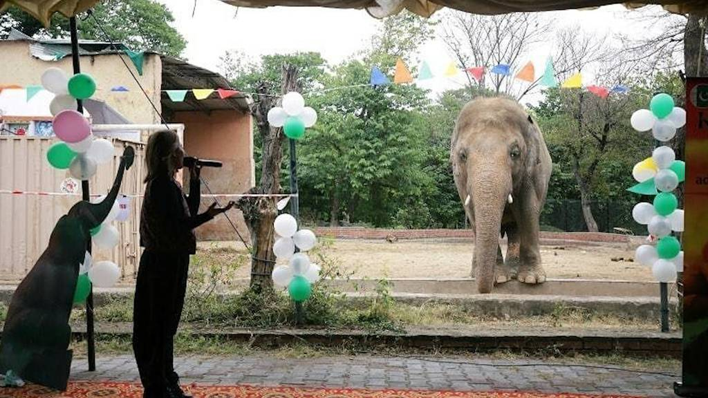 «Einsamster Elefant der Welt»: Kaavan auf dem Weg in die Freiheit
