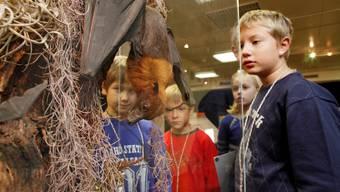 Solche Kaliber wie diesen Flughund können unsere Kinder nur im Naturmuseum sehen.  Hanspeter Bärtschi
