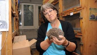 Margrit Kobel aus Meisterschwanden betreib in ihrem Keller eine Igelstation.
