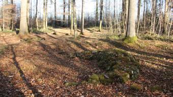 Grabhügel Zigiholz im Sarmenstorfer Wald