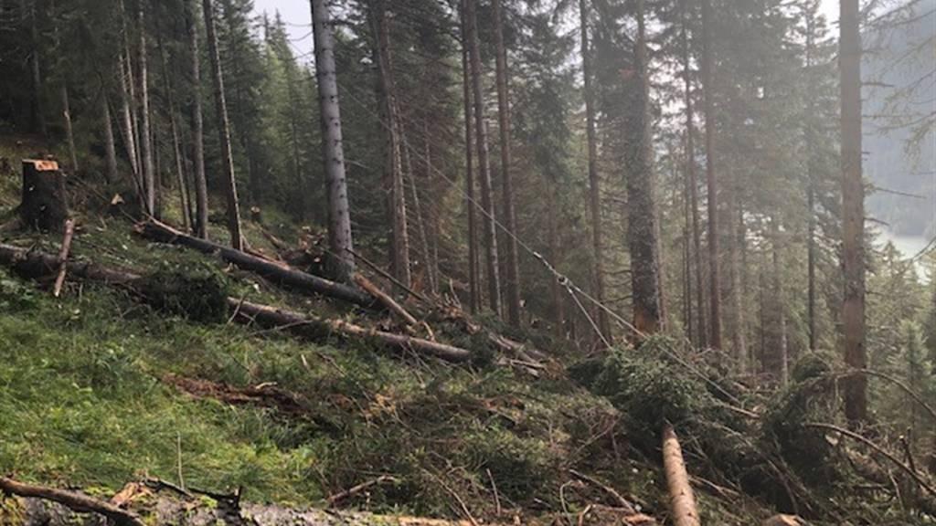 Forstwart beim Transport von Baumstämmen verletzt