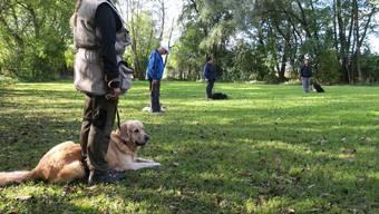 Das Obergericht Zürich musste sich mit einem Vorfall aus einem Hundetraining beschäftigen. (Symbolbild)
