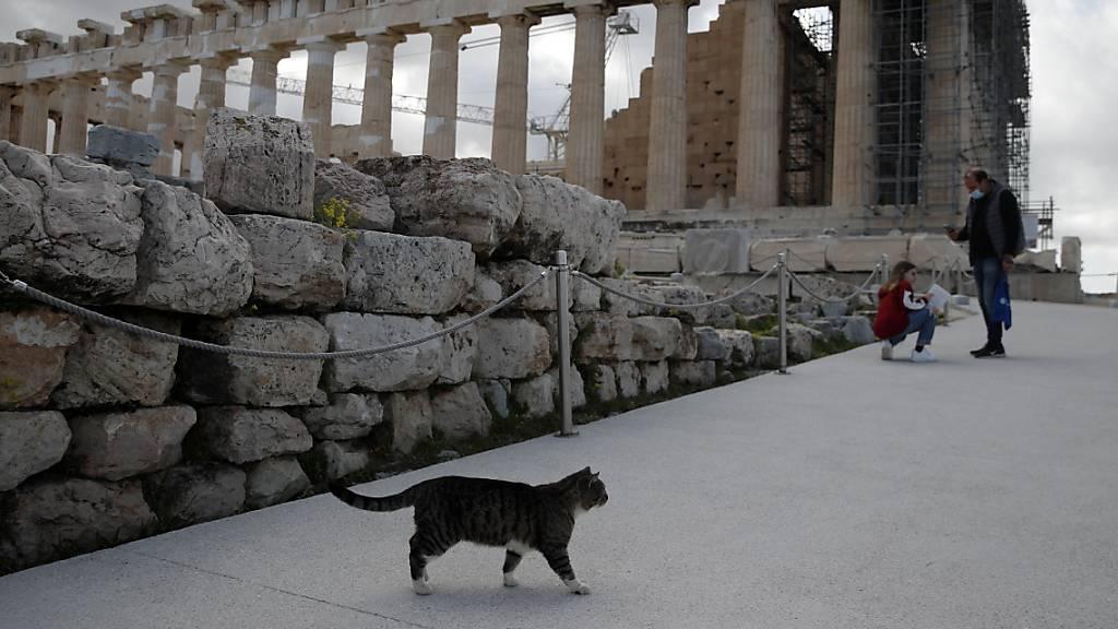 Eine Katze läuft über den wieder für Besucher geöffneten Akropolis-Hügel in Athen. Foto: Thanassis Stavrakis/AP/dpa