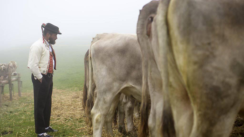 Nicht nur die Zahl der Bauern, auch jene der Milchkühe geht in der Schweiz zurück - es sei denn, sie ackern und grasen unter dem Label «Bio». (Symbolbild)