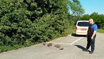 Die Polizei hält die Entenfamilie auf.