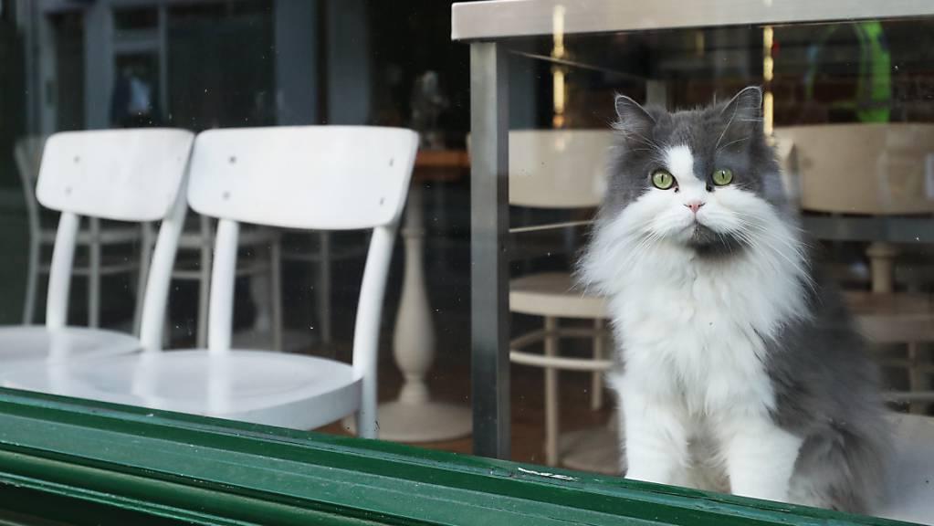 ARCHIV - In Großbritannien sind Hunderte Katzen mutmaßlich an einer seltenen Krankheit gestorben. Foto: Yui Mok/PA Wire/dpa Foto: Yui Mok/PA Wire/dpa