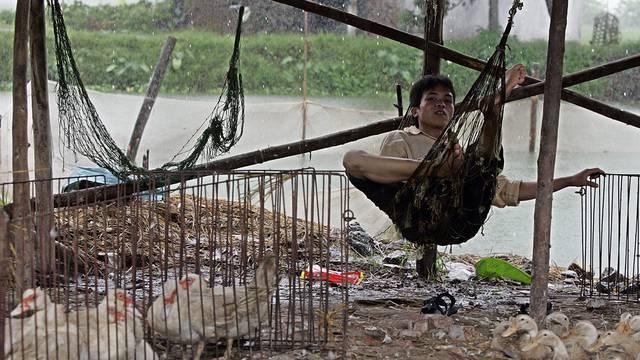 Ein Mann hütet Hühner und Enten auf einem Markt in der vietnamesischen Ha-Tay-Provinz (Symbolbild)