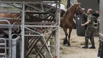 Ein Armeeangehöriger führt ein Pferd vom Hof des mutmasslichen Tierquälers Ulrich K. ab.