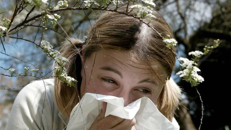 Es ist wieder Frühling: Haselnuss- und Erlenpollen machen einigen das Leben schwer.