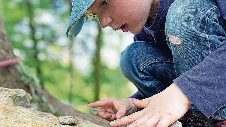 Auf dem Perimukweg sind auch Fossilien zu entdecken.