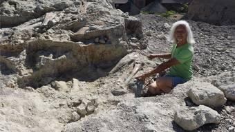 Paläontologe Ben Pabst entdeckte im Juli 2015 in Frick ein acht Meter langes Plateosaurierskelett. Nun präpariert er die ersten Knochen der Riesenechse. TWE/Archiv