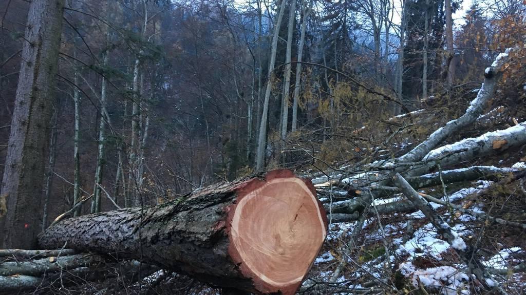 Dieser Baum fiel auf einen 24-jährigen Schweizer.