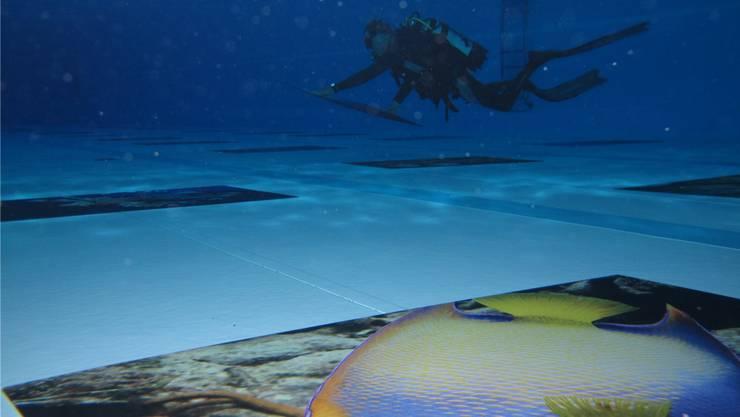 Ein übergrosser Kugelfisch in der Unterwasser-Weltausstellung am Boden der Badi Möriken-Wildegg.