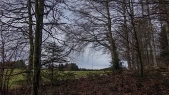 Wo brüten welche Vögel auf dem Lindenberg? Private Vogelbeobachter sollen mit Fotos belegen, dass sich die Vogelwarte Sempach in ihrer Einschätzung täuscht. Im Hintergrund der Mast für die Windmessungen auf dem Horben.Eddy Schambron
