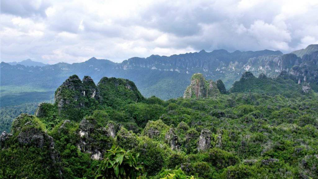 Ältestes Bild der Welt befindet sich in Höhle auf Borneo