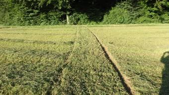 Autofahrer rollt über Feld und verschwindet im Wald