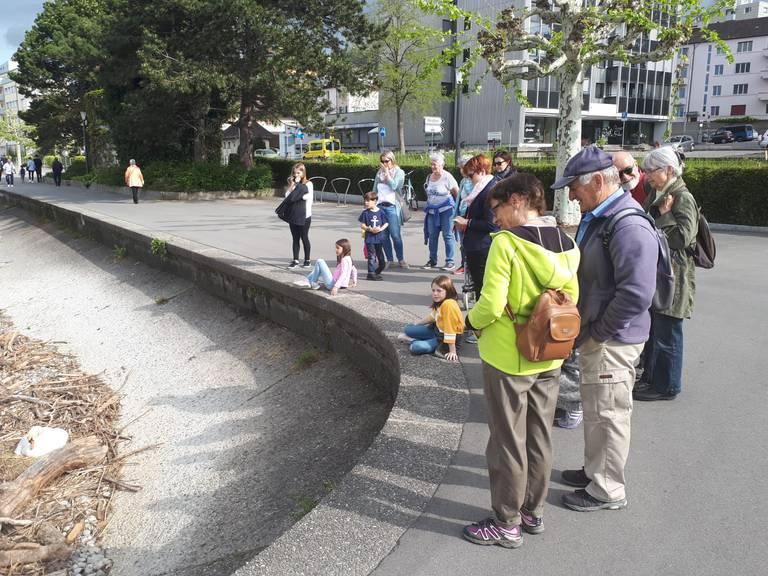 Viele Menschen schauten am Wochenende dem Schwanenpaar zu. (Bild: FM1Today/Christoph Thurnherr)