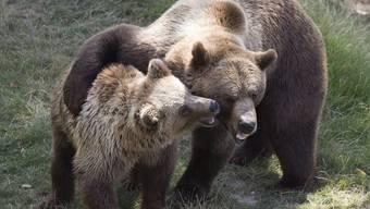 Als ob er ein stolzer Vater wäre: Finn (rechts) und Ursina nach der Zusammenführung