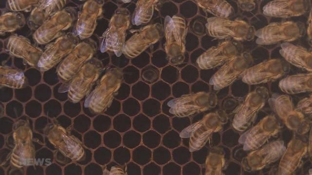 Rekordertrag für Honigproduzenten