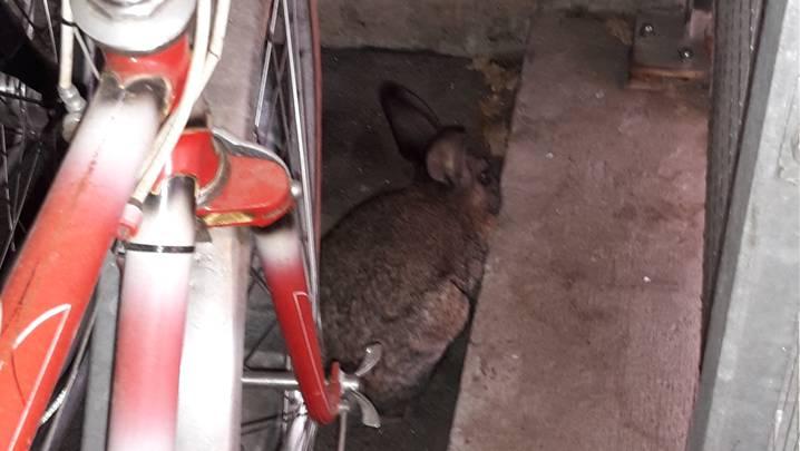 Das Kaninchen versteckte sich in der hintersten Ecke des Veloständers. nsn
