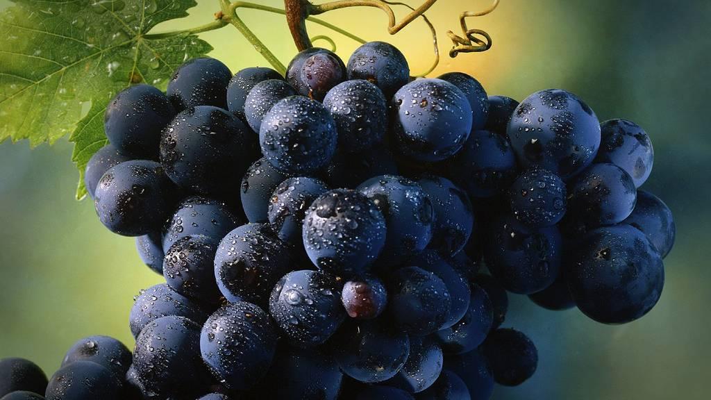 Schlechte Weinlese