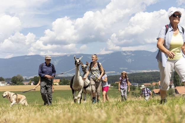 Lamas begleiten die 3. Etappe AZ-Leserwandern von Lohn-Lüterkofen nach Lüterswil, am 15. Juli 2018. Impressionen von der 3. Etappe AZ-Leserwandern von Lohn-Lüterkofen nach Lüterswil, am 15. Juli 2018.