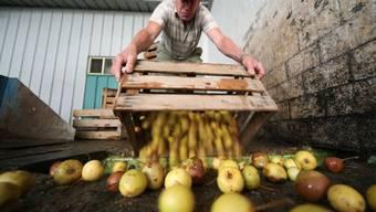 Landwirte liefern Mostobst an (Symbolbild)