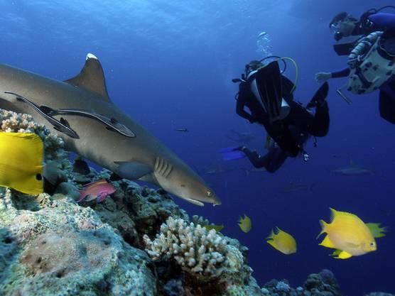 Auch Haie gibt es dort zu sehen