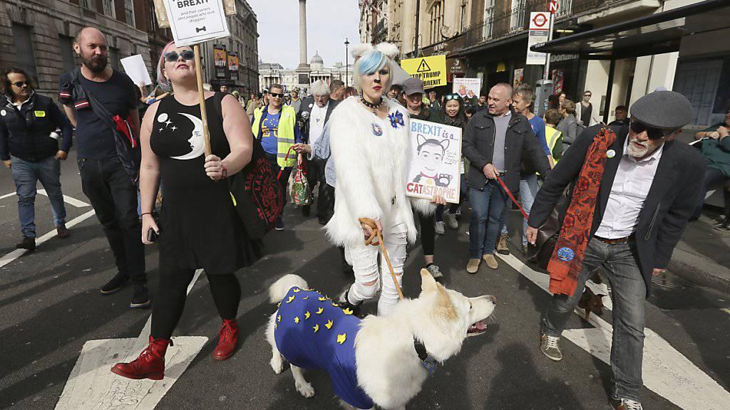 Britische Hundehalter haben am Sonntag , wie bereits im Oktober, gemeinsam mit ihren Vierbeinern in London gegen den EU-Austritt ihres Landes demonstriert. (Archivbild)