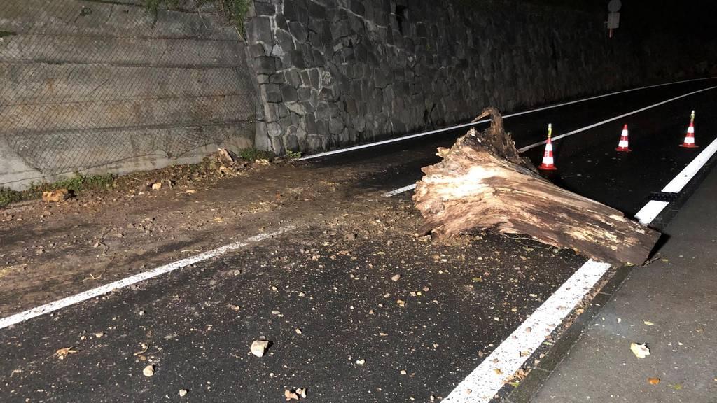 Morscher Baumstrunk fällt auf Axenstrasse