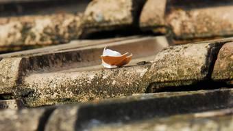 Eierschalen liegen auf einem Hausvordach in Hettenschwil.