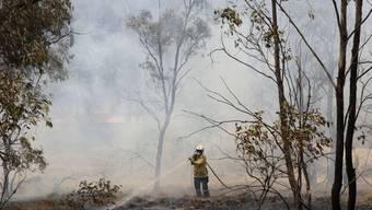 Die Buschbrände von Ende 2019/Anfang 2020 in Australien haben Hunderte von Pflanzen- und wirbellosen Tierarten an den Rand der Ausrottung gebracht. (Archivbild)