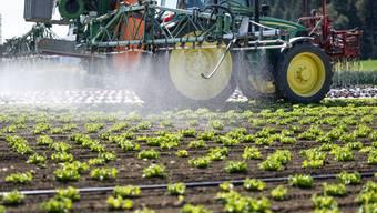 Ein Bauer spritzt ein Mittel, das den Salat unter anderem vor Pilzkrankheiten schützt.