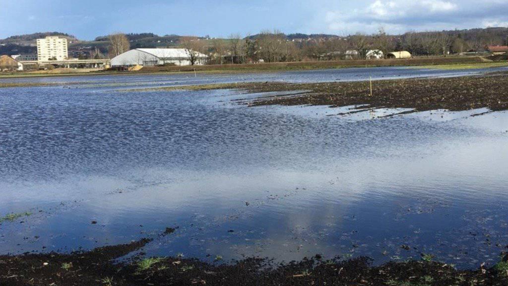 Für Zugvögel Ackerland bei Yverdon geflutet