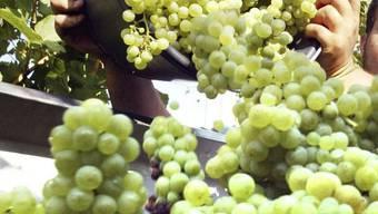 Der Wein wird im Restaurant Bad angeboten und dort offenbar sehr gerne getrunken.