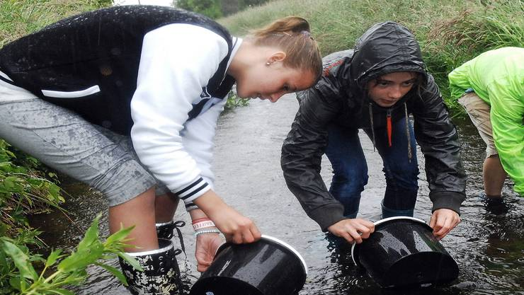 Bezirksschüler setzen im Seitenkanal des Klingnauer Stausees 1000 Junglachse aus. Fotos: Angelo Zambelli