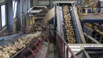 """Die Bauern wehren sich gegen Sparpläne beim Bund. Die Preise für Schweine, Milch und Zuckerrüben seien """"desaströs"""", argumentiert der Bauernverband. (Archivbild)"""