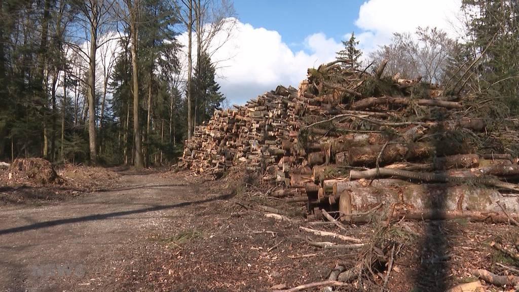 Abgeholzte Bäume im Kanton Bern führen zu hitzigen Diskussionen