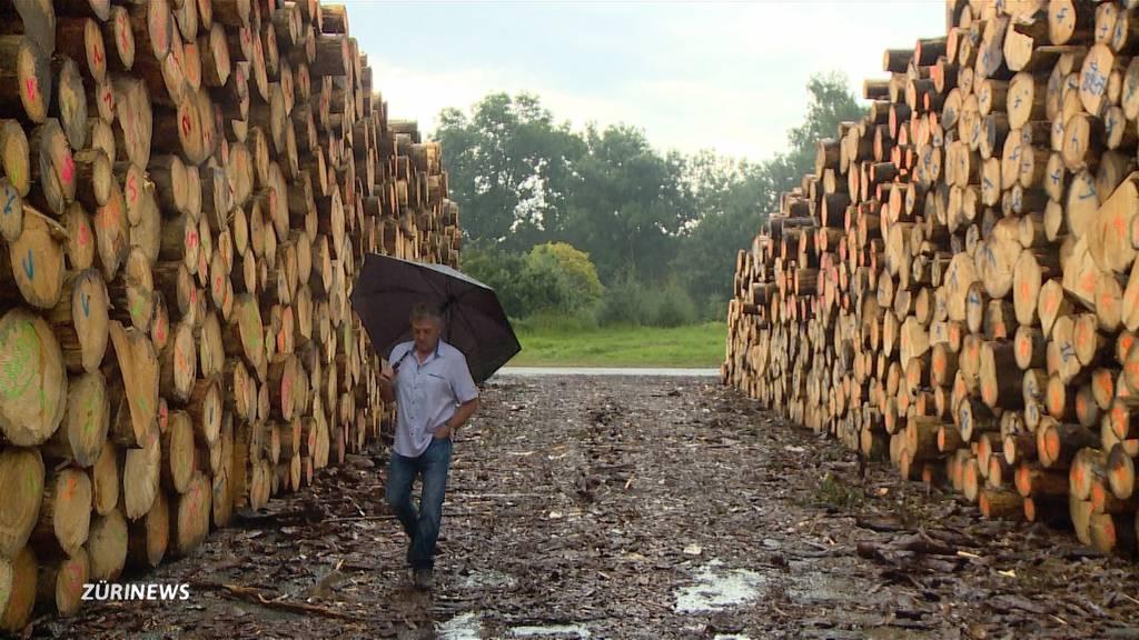 Holzexport wegen Borkenkäfer