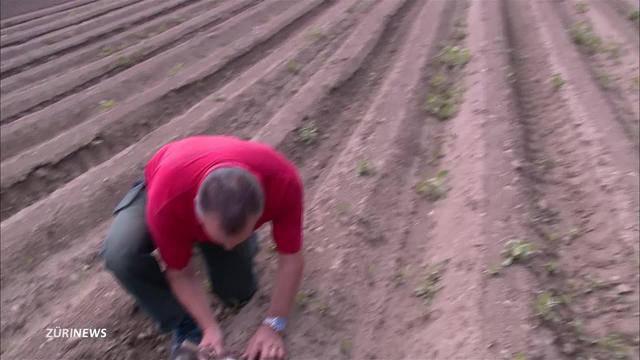 Wassermangel bei Zürcher Bauern